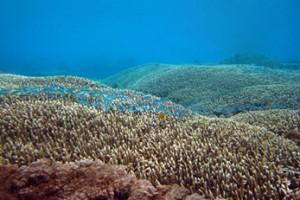 Snorkeling-Padang-Bai