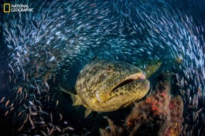 groupers_mm8005_0714_001