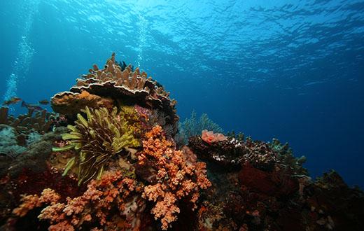 Snorkeling Tulamben Reef Bali