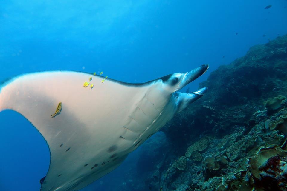 Manta Rays Bali Nusa Penida