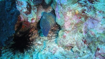 Diving Padang Bai