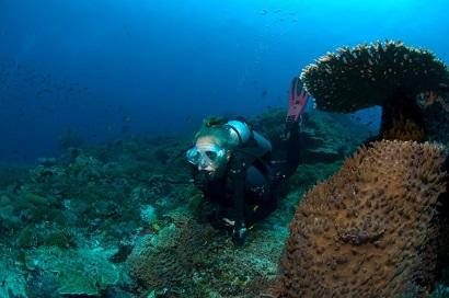 Bali tauchen