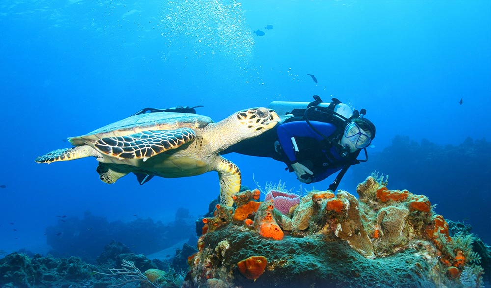 dive Bali Turtle and diver