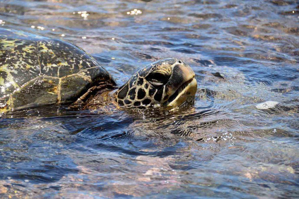 turtle-eat-plastic
