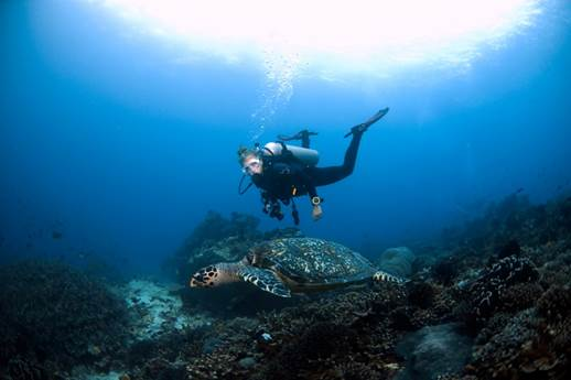 bali diving adventure