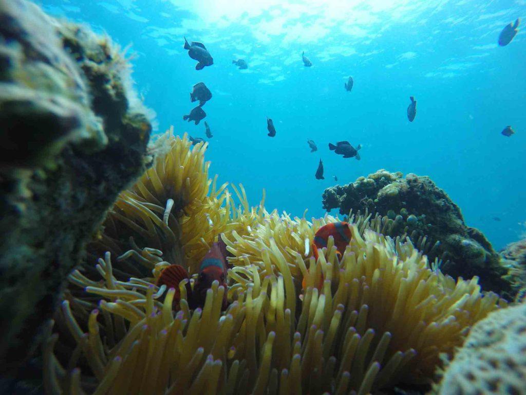 snorkeling padang bai