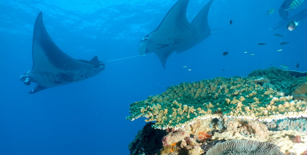 5 Things You Should Know About Diving Bali
