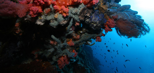 diving sites in Amed