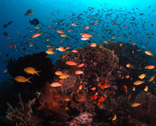 coral reef nusa penida bali