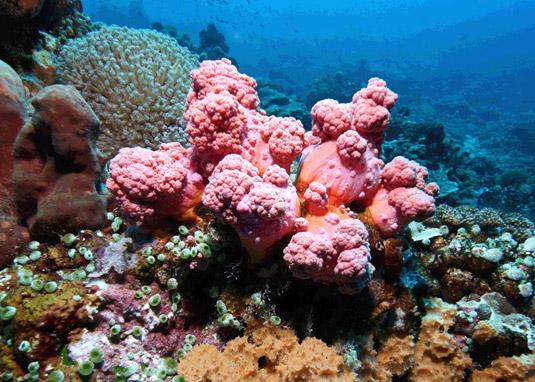 coral reef padang bai bali