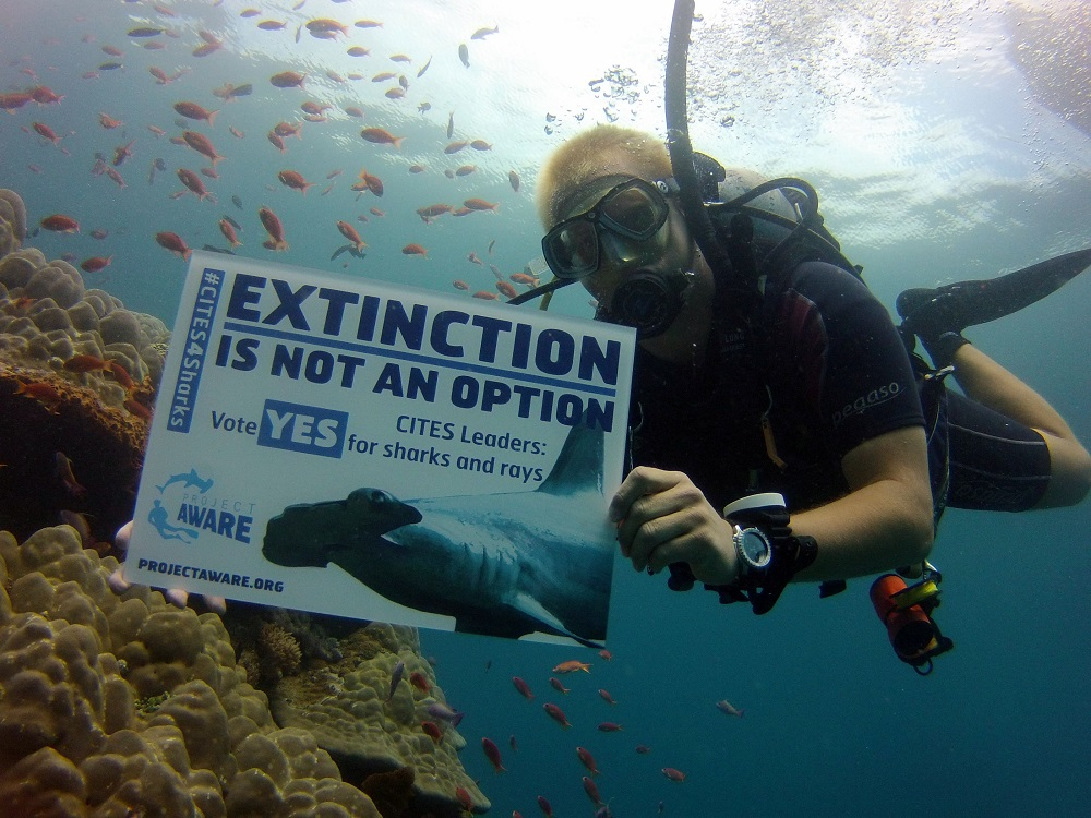 Project AWARE in Bali