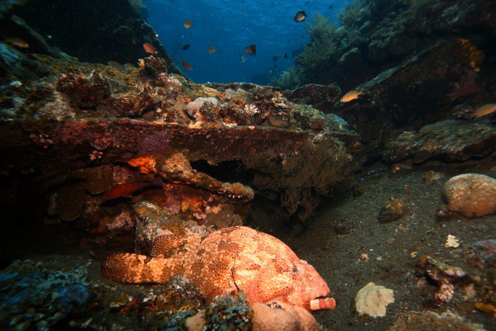 Tulamben Diving