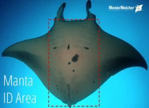 Manta ID Area