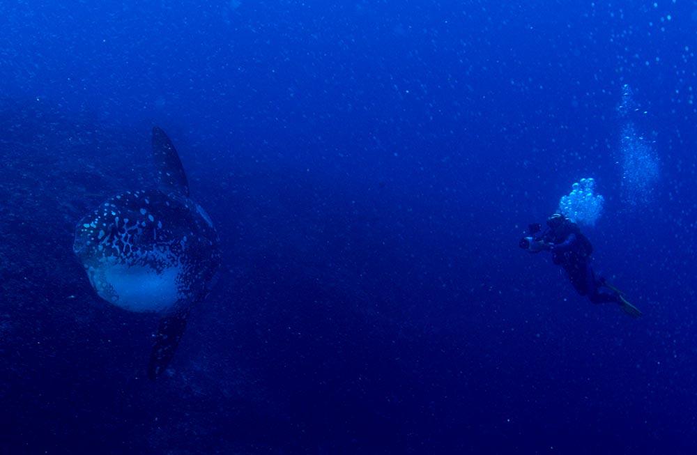 Mola Mola Nusa Penida Bali Diving