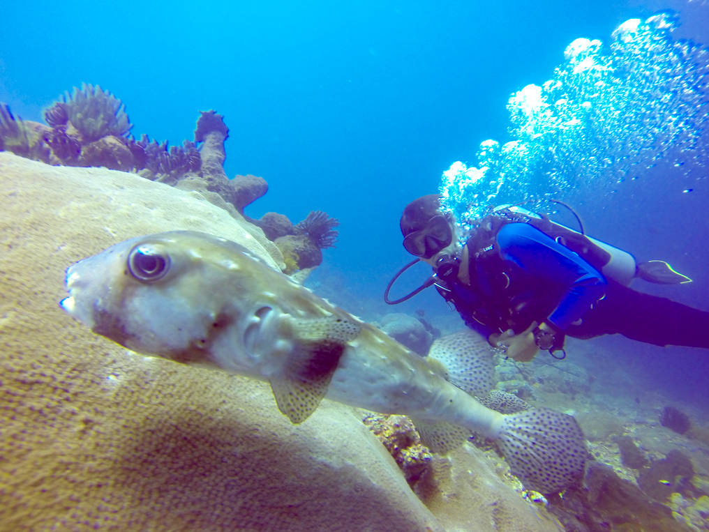 BSB Dive buddy with porcupine puffer fish