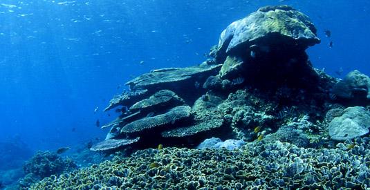 Snorkeling in Amed