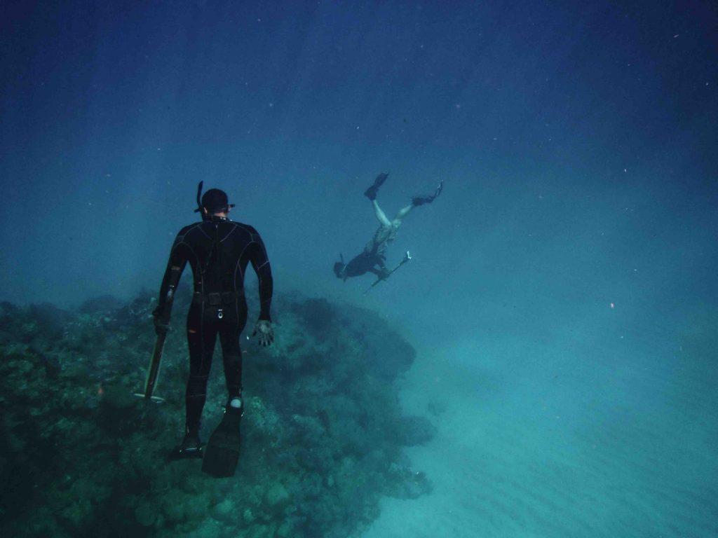 conserve the ocean
