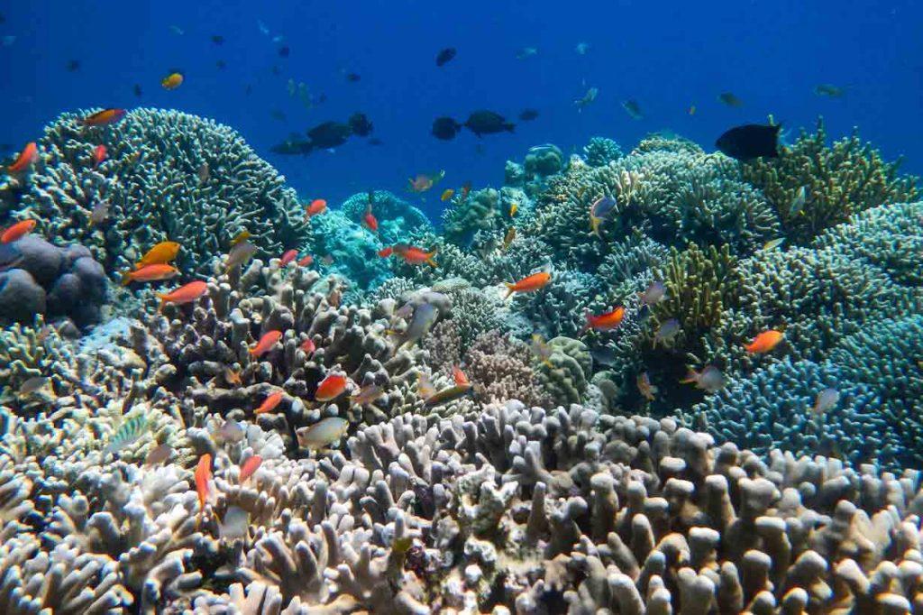 coral reef menjangan