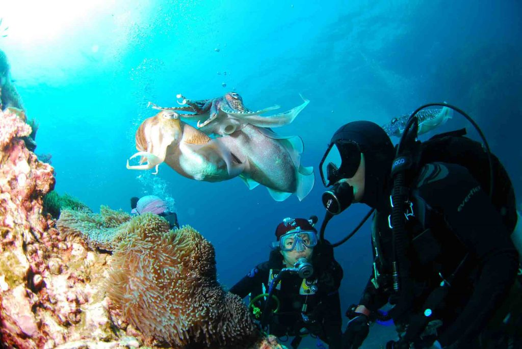master scuba diver specialty course