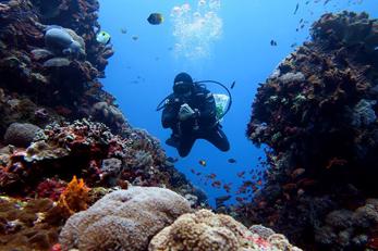 IDC Bali Diving