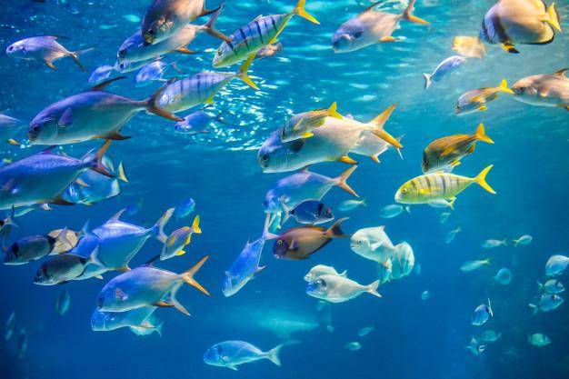 sanur underwater