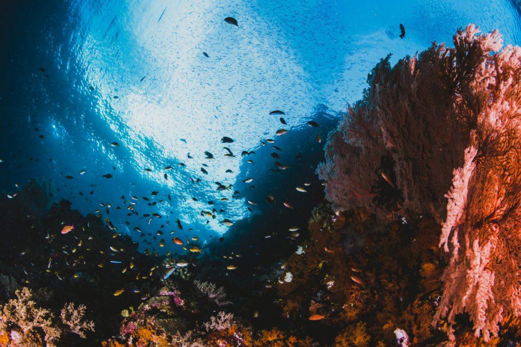 Sealife Raining Season